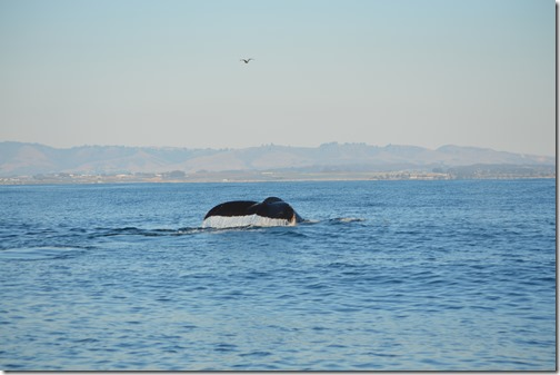 Whale Tail-2