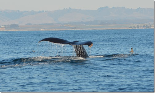 Whale tail-3