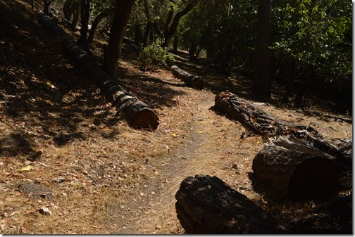 Del Monte Forest-1