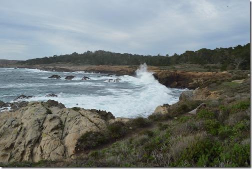 Point Lobos swells