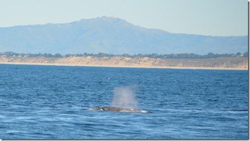 PG whale-2