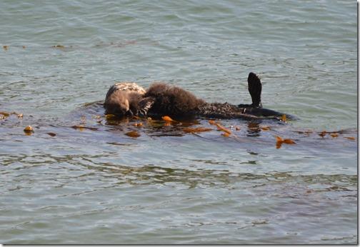 Sea Otter twins-2
