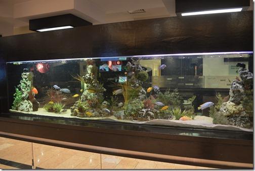 CP DUB aquarium