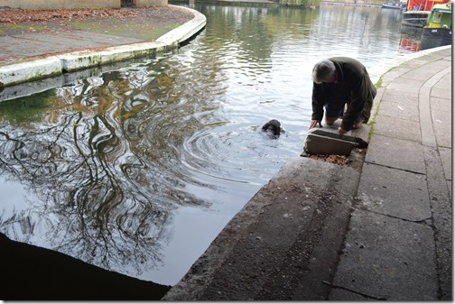 Paddington dog swim