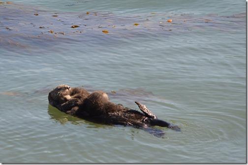 Sea otter twins-3