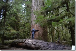 Douglas fir tree hugger