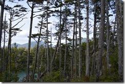 wild Pacific trail 3