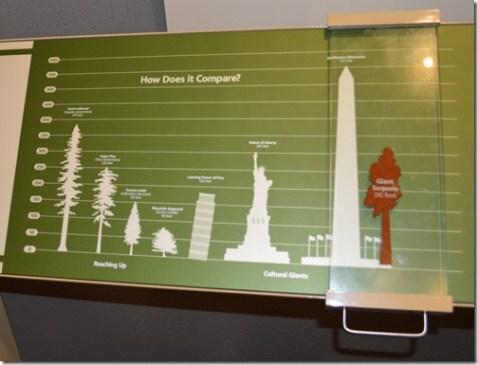 Giant Sequoia info