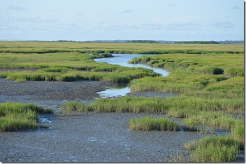 Jekyll Island Visitor Center marsh view