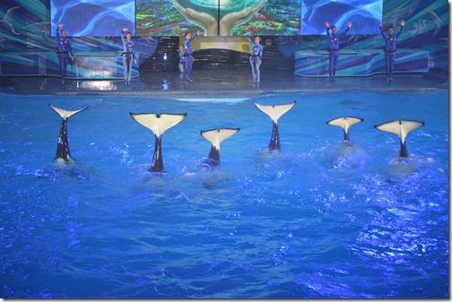 SeaWorld orcas-2