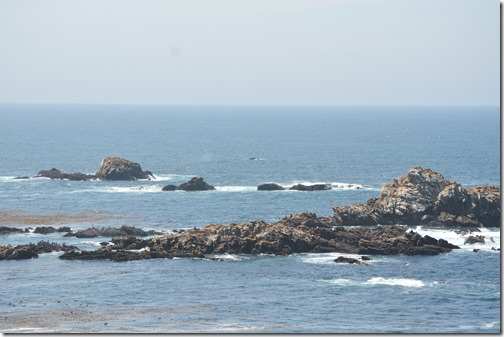 Sea Lion Point