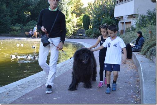 Pet petting