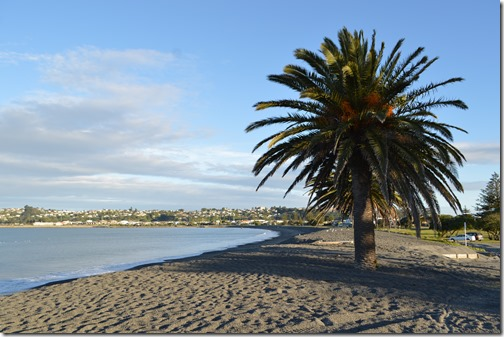 Westshore Beach Palm tree