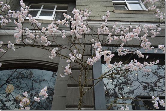 Vilnius signs of spring
