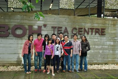 Boh Tea Plantataion Shot