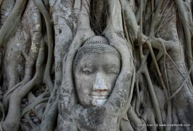 buddha relic
