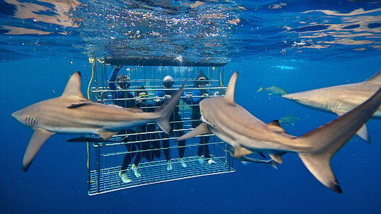 тур с акулами