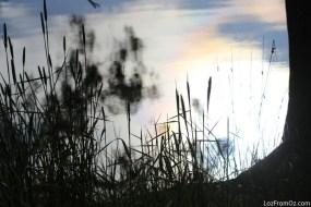 0095 Duck Lagoon