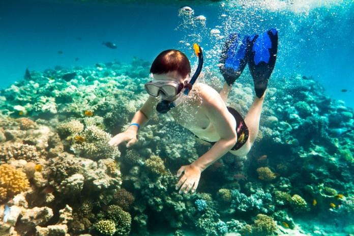Lặn ngắm san hô tại Côn Đảo - trải nghiệm tuyệt vời (Nguồn: Internet)