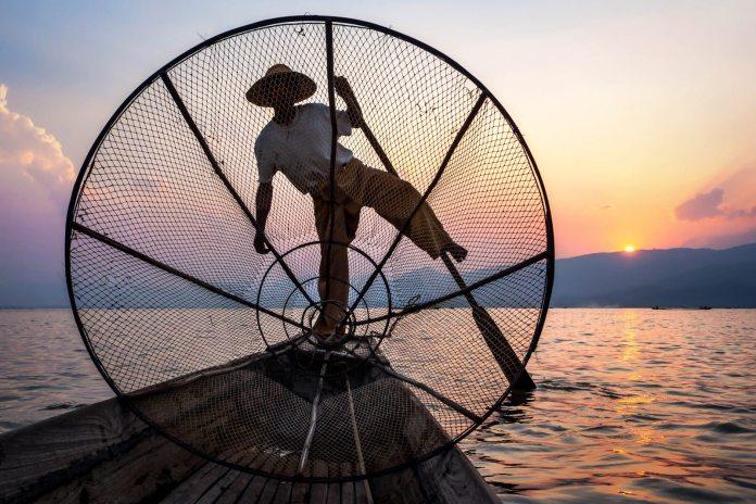 An Intha fisherman rowing at sunset