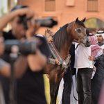 Ksa S Arabian Horse Festival Delights Equestrian Fans Lonely Planet