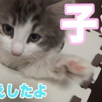 【猫】子猫をお迎えしましたのでご紹介します[ゲーム実況by茶々茶]