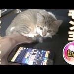 【モンスト】モン玉 Lv5 猫に引いてもらった【MOYA/モヤ】[ゲーム実況byMOYA GamesTV]