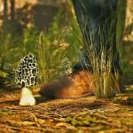 【Morels The Hunt】大自然の中でひたすらキノコ狩りをするシミュレーターゲームが新発売される【アフロマスク】[ゲーム実況byアフロマスク]