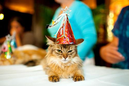 Kitty_hates_birthday_surprises