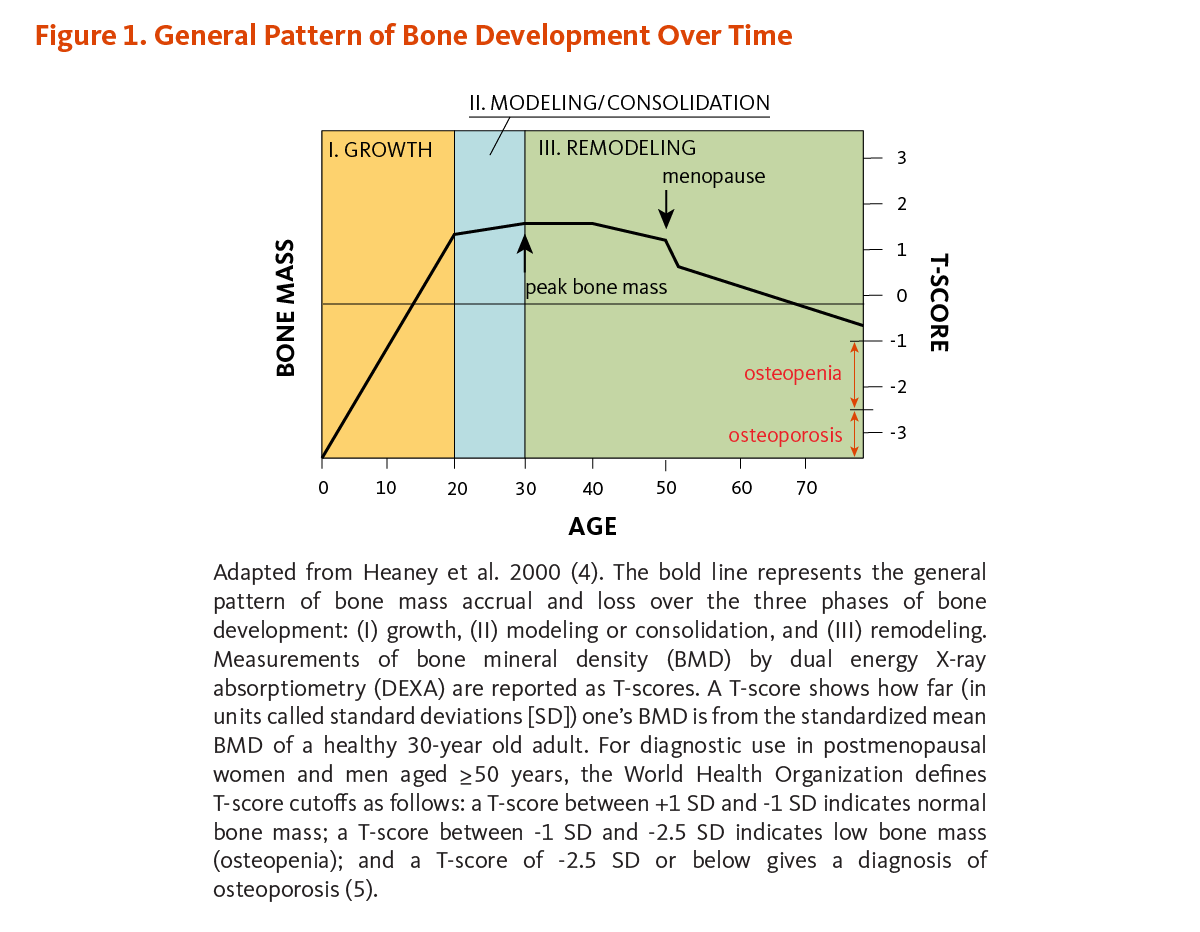 hight resolution of figure 1 general pattern of bone development over time the figure shows the general