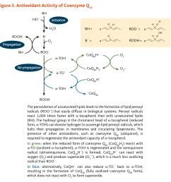 figure 3 antioxidant activity of coenzyme q10 the peroxidation of unsaturated lipids leads to [ 1200 x 1176 Pixel ]