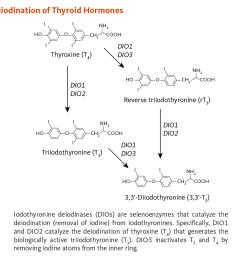 figure 1 iodine intake and thyroid function in response to thyrotropin releasing hormone [ 1200 x 881 Pixel ]