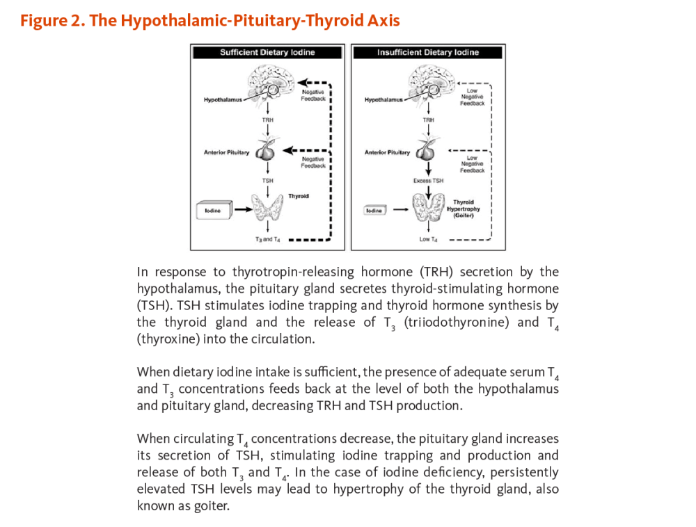 medium resolution of figure 2 the hypothalamic pituitary thyroid axis in response to thyrotropin