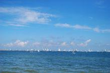 Rassemblement des voiliers à Gdynia (2)