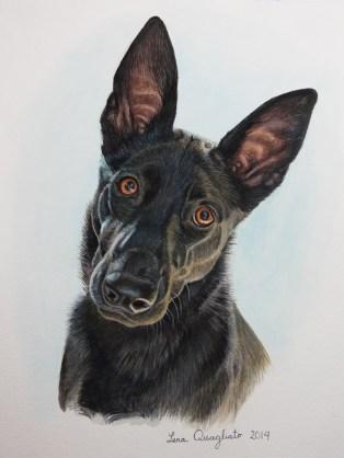 """""""Dali"""" the rescue dog (Sister to Chitto)"""