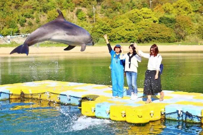 Dolphin_Center (2)