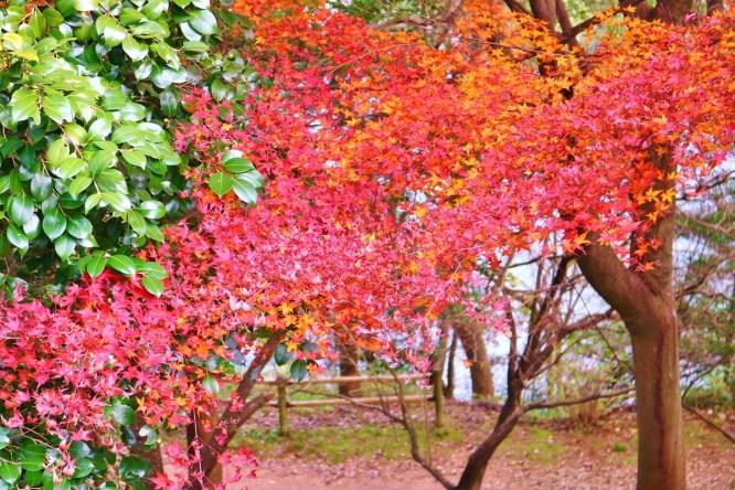 Kinbuchi_Park (11)