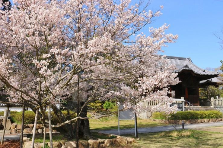 Yashima (60)