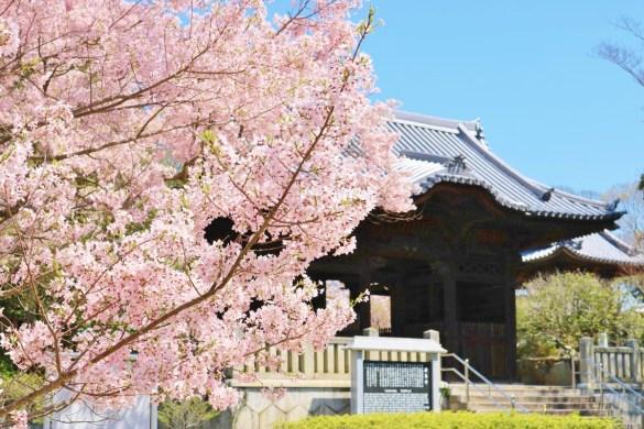 Yashima_ji (10)