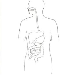 diagram of digestive system jpg format  [ 1275 x 1755 Pixel ]
