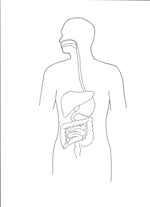 small resolution of diagram of digestive system jpg format