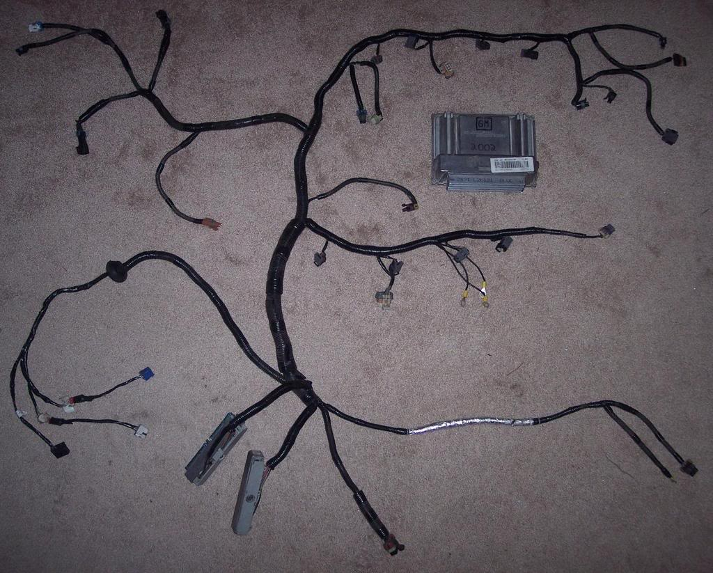 hight resolution of t56 conversion wiring ls1tech camaro and firebird forum discussion t56 wiring harness