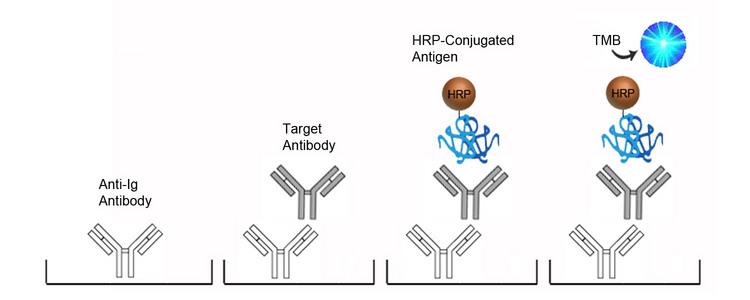 Human Anti-CMV / Cytomegalovirus antibody (IgM) Qual ELISA