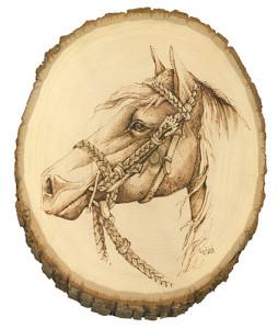 horse-whitebackground