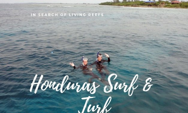 Honduras Surf & Turf