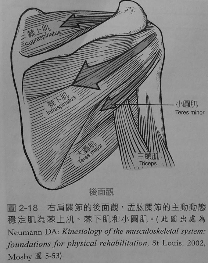 新手專欄(楷文教練):人體使用說明書 | LSTFITNESS