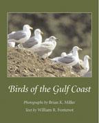 birds gulf coast