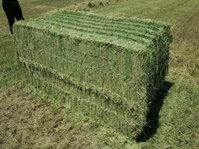 American Alfalfa Lucern Hay for sale. We supply Natural Cattle Alfalfa Hay. How much Lucerne hay to feed a horse?Wholesale Alfalfa Hay for Animal Feeding.