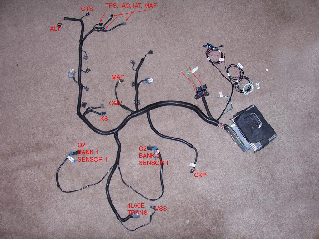 ls1 wiring harness diagram cobalt orbital information for 1998 to 2002 camaro and firebird