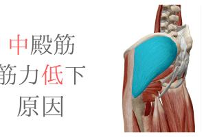 中殿筋の筋力低下の要因を股関節の動きから考えてみた